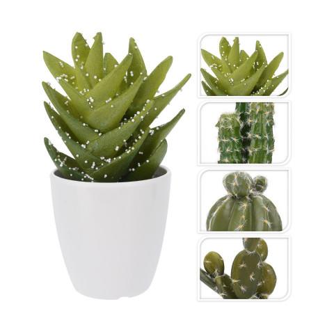 Cactus In Pot 4 Assorted...